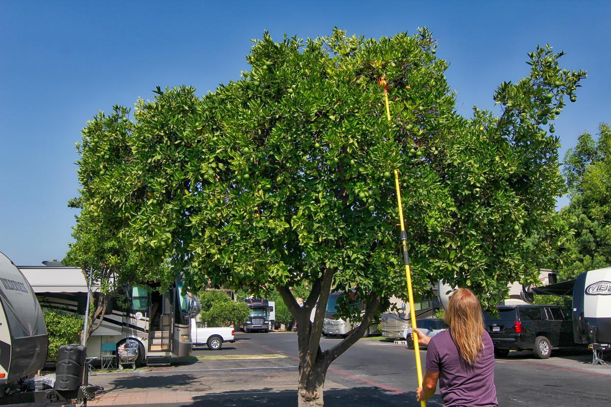 Orangeland RV Park image 6
