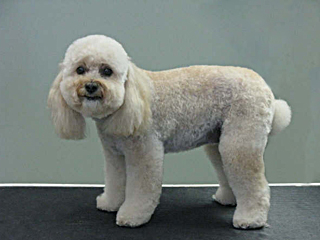 Tiffany's Grooming Salon in New Westminster