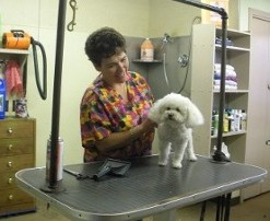 Dog Grooming Leominster