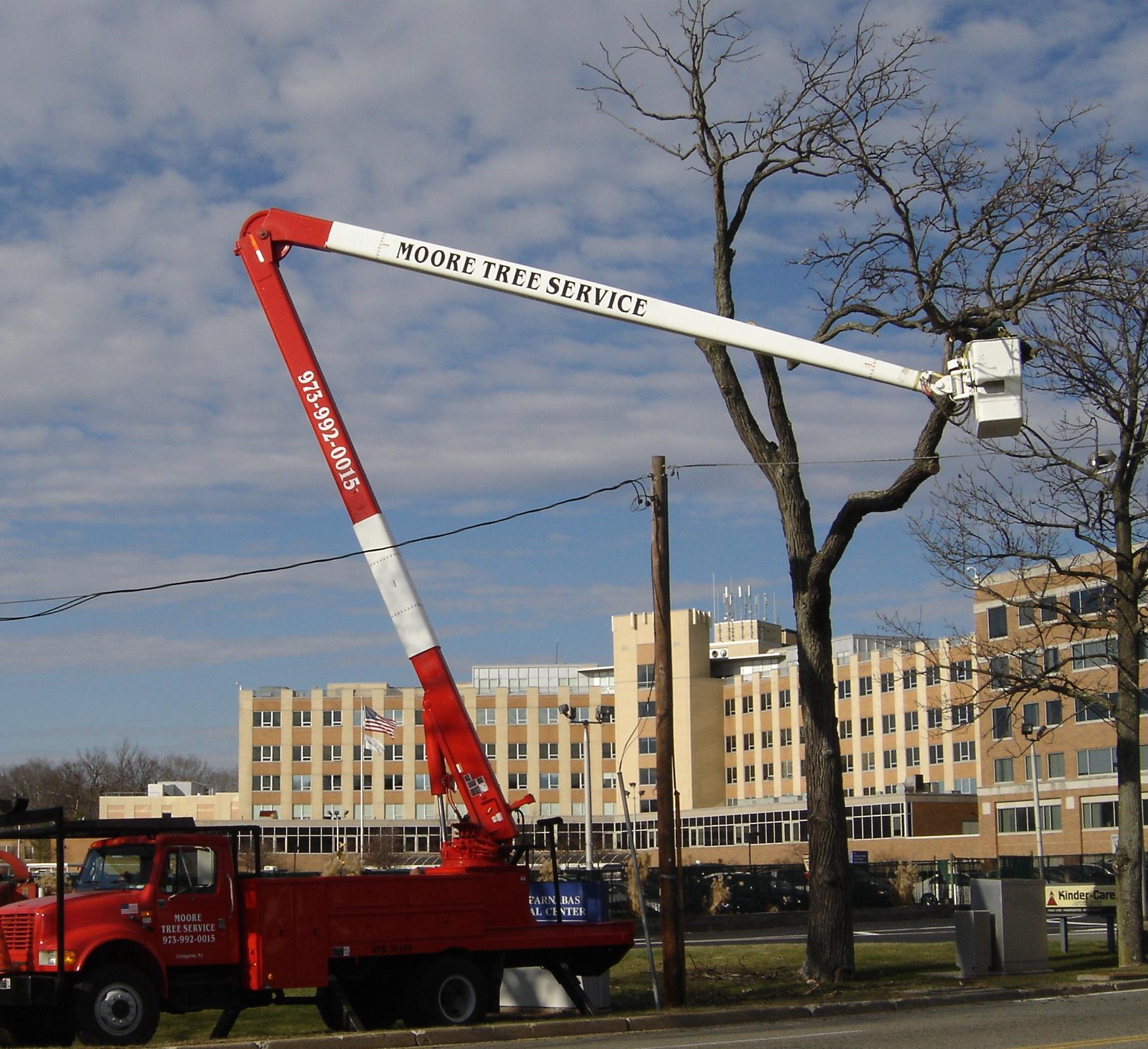 Moores Tree Service