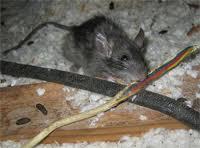 D & T Pest and Termite Control, Inc. image 2
