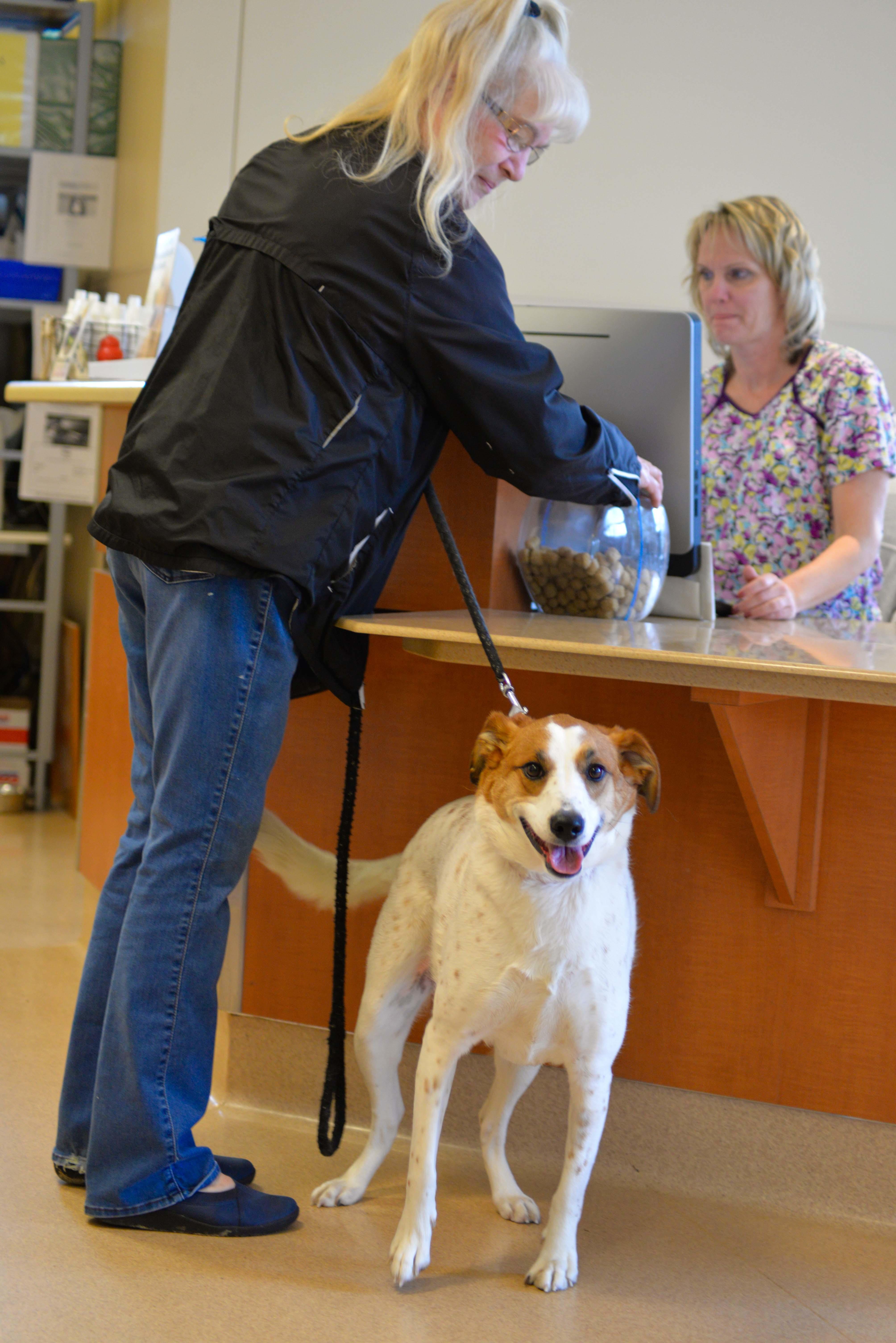 Archer Veterinary Clinic image 11