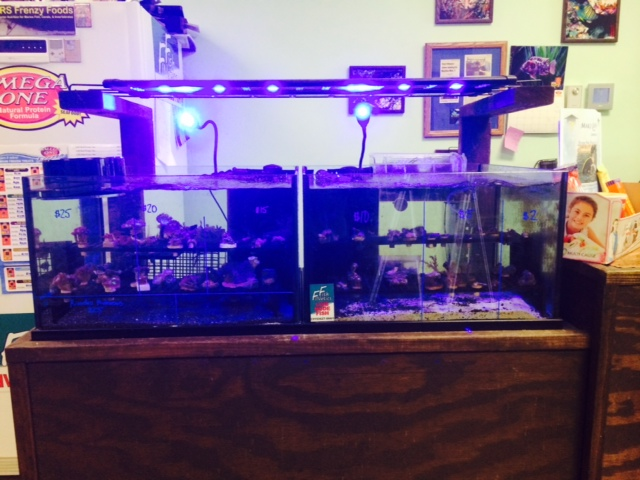 Fish Finatics Coupons Near Me In East Syracuse 8coupons