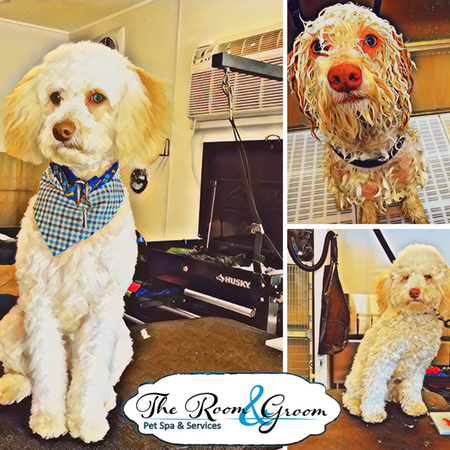 The Room & Groom, Pet Spa & Services image 44