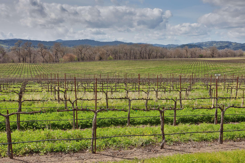 Hampton Inn & Suites Windsor - Sonoma Wine Country image 11