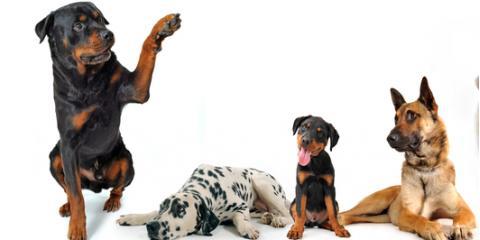 Penfield Dog Boarding Kennels