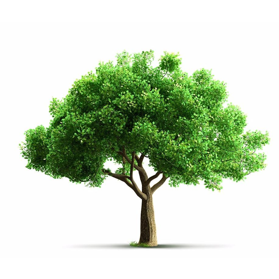 Texas Tree Doctor