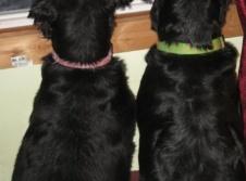 Limerick Veterinary Clinic image 3