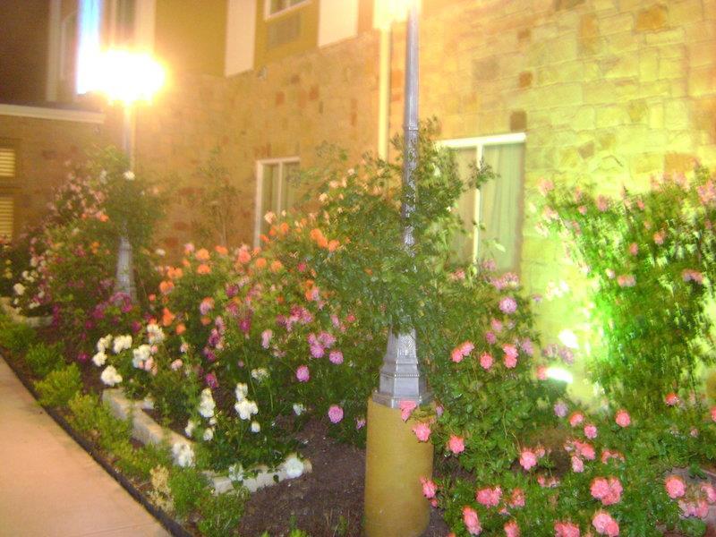 Best Western Plus Blanco Luxury Inn & Suites image 41