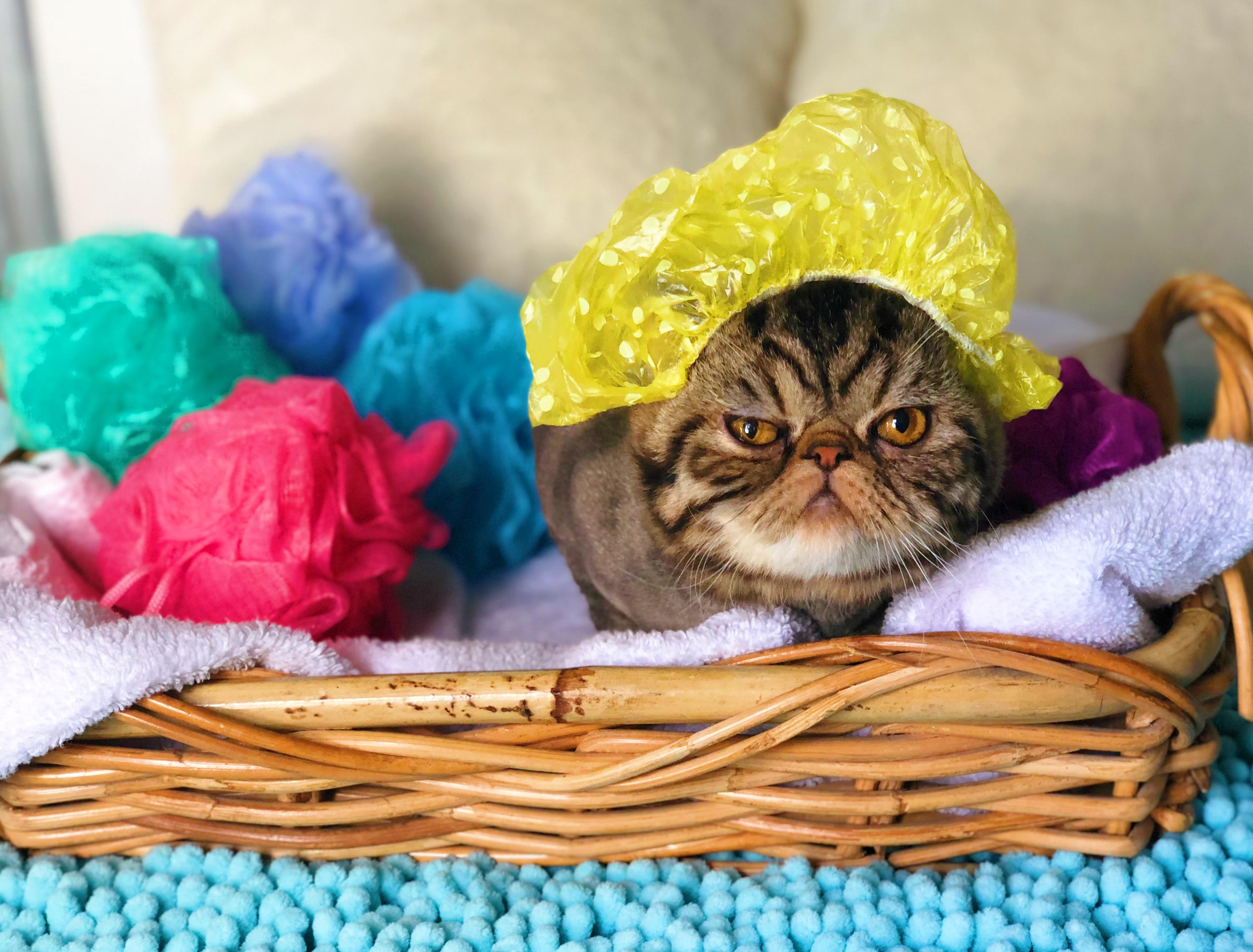 Lowcountry Feline Spa image 0