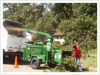 Houston Tree Team image 23