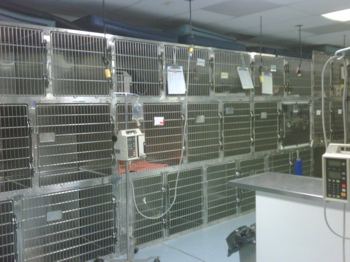 South Shore Animal Hospital image 3