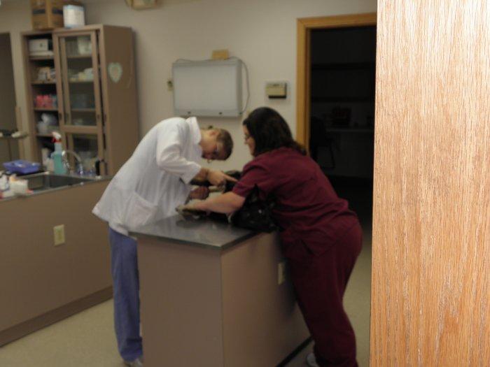 VCA Shadeland Animal Hospital image 6