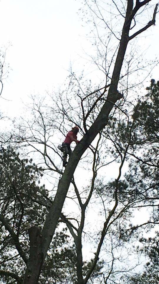 Tim Kilpatrick Tree Service image 2