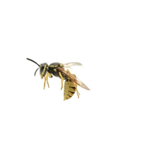 Sentinel Pest Company