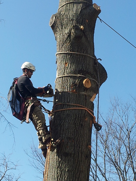 Milton's Tree Care Services image 4
