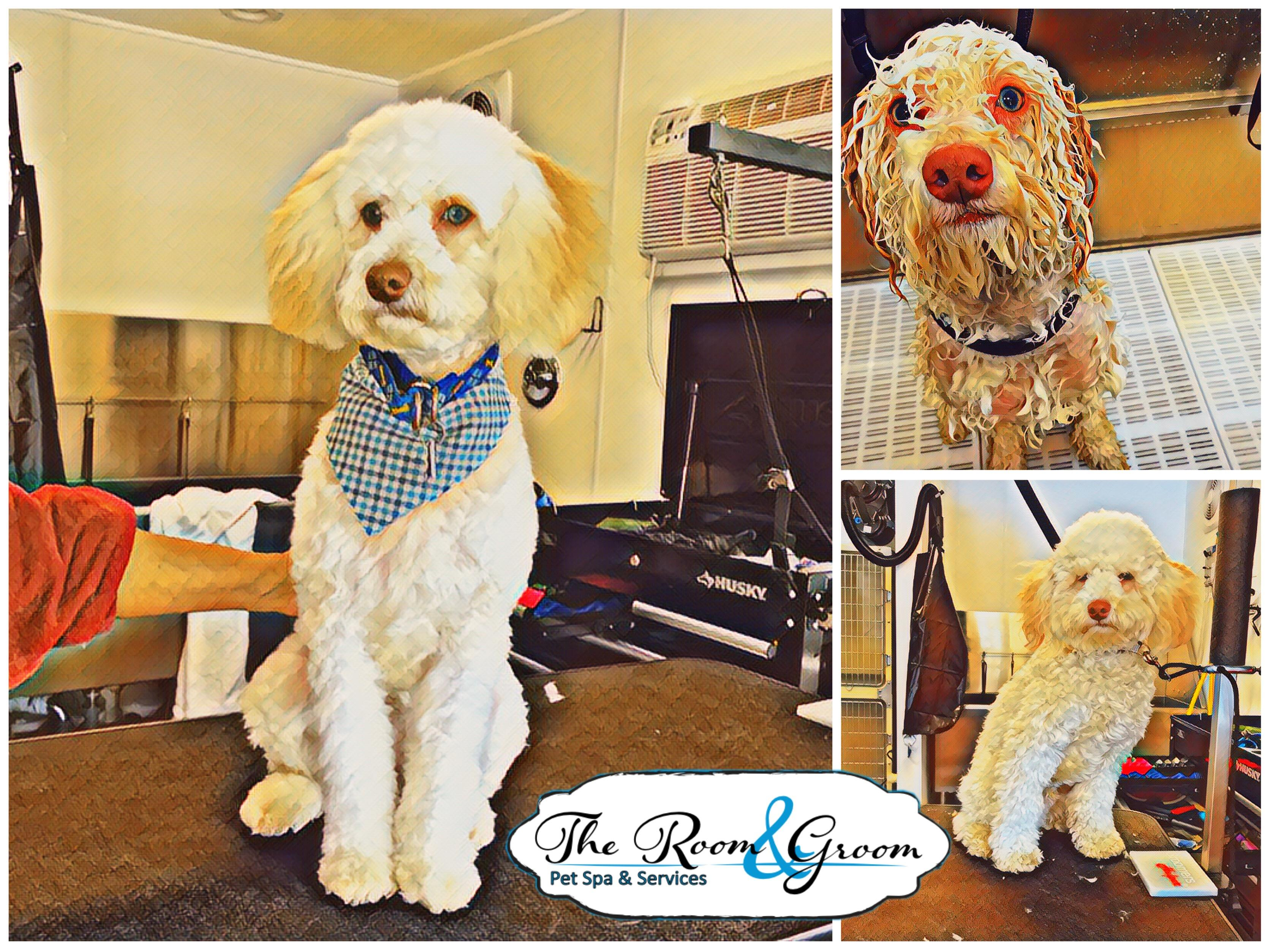 The Room & Groom, Pet Spa & Services image 74