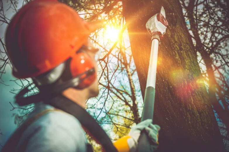 Mortensen Tree Service, Inc. image 0