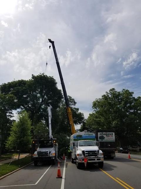 Schneider Tree Care image 0