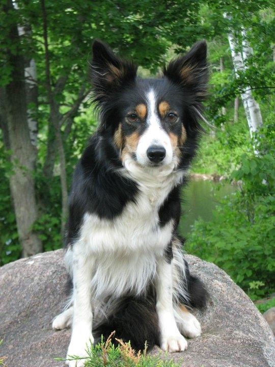 Prodigy Pups Dog Training LLC image 3