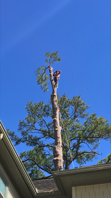 Houston Tree Removal image 7