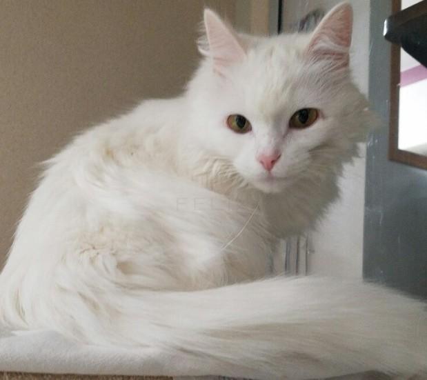 Oakview Veterinary image 2