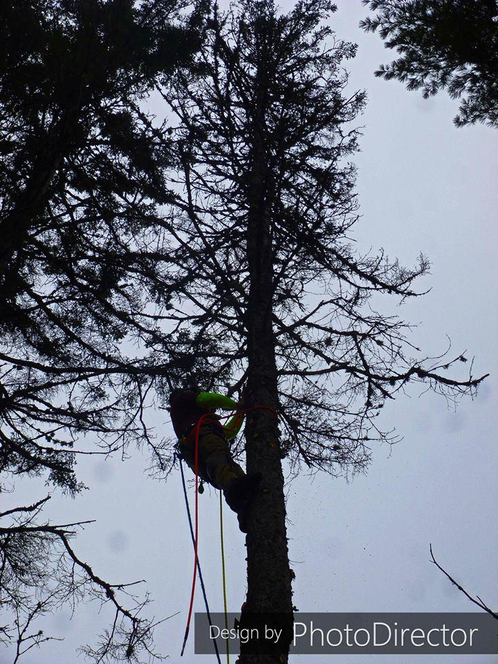 Joe's Tree Service image 3