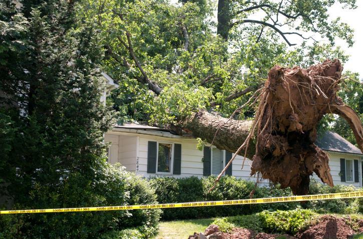 Tree Experts, Inc. image 2