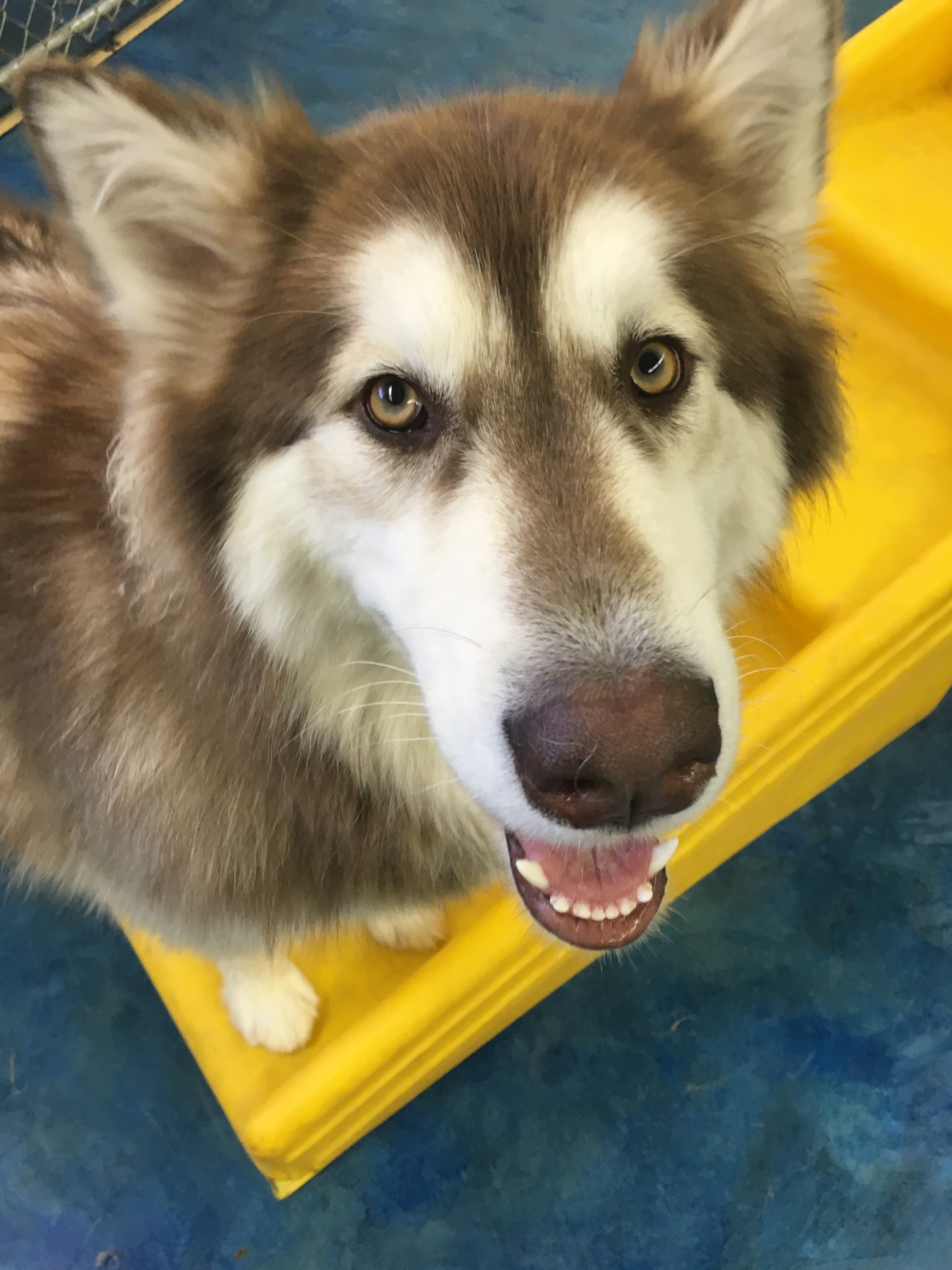 Jagger's Doggie Daycare, Dog Grooming, Training & Boarding image 21
