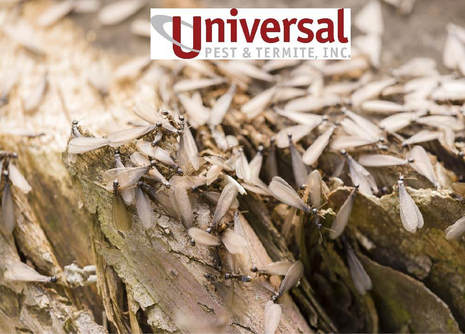 Universal Pest & Termite image 3