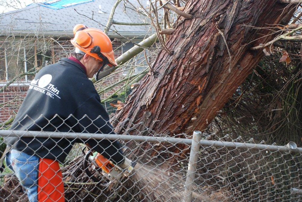 Wind Thin Tree Service Inc. image 9