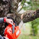 H&H Tree Services image 2