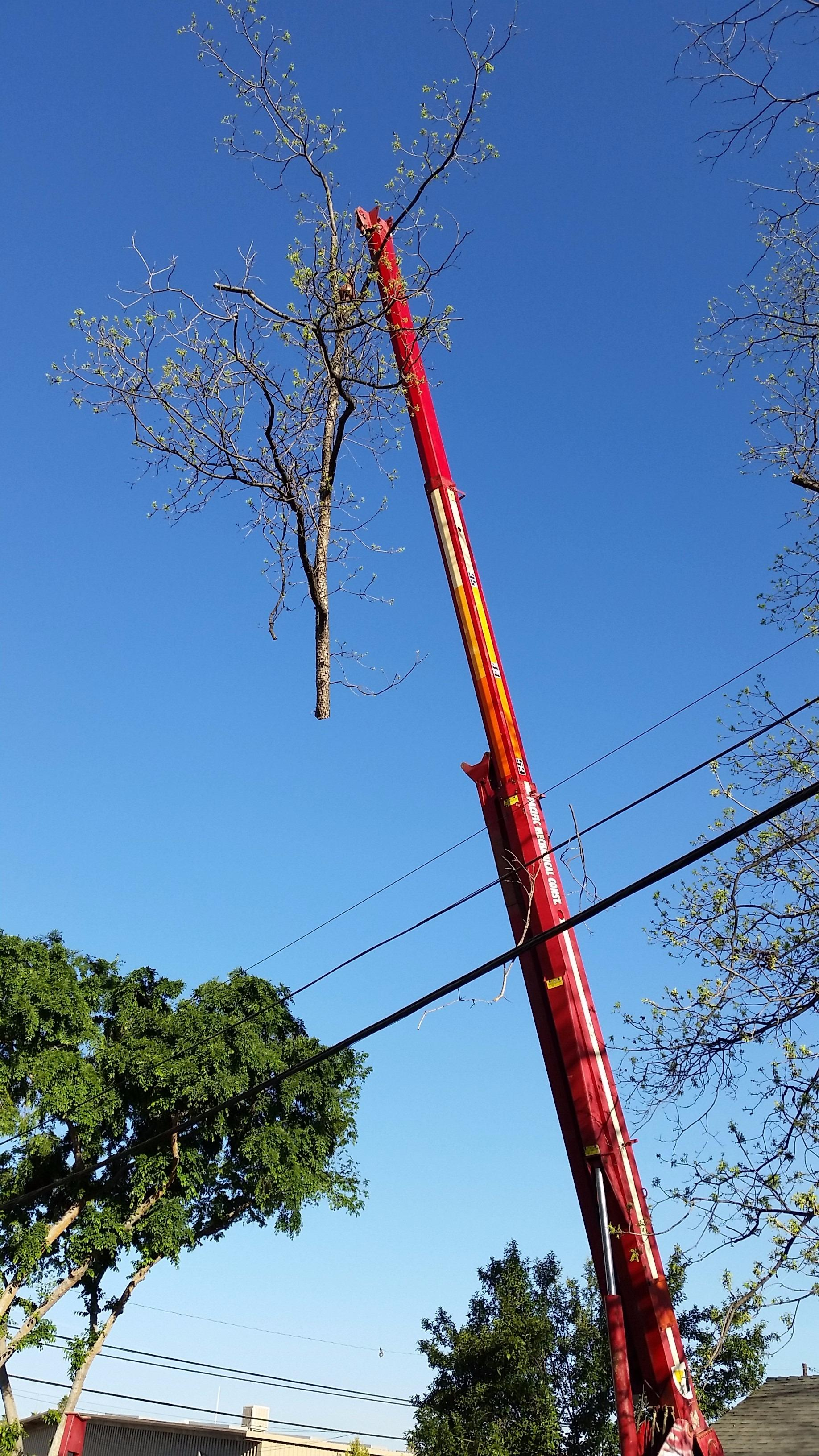 A & J Tree Service image 4