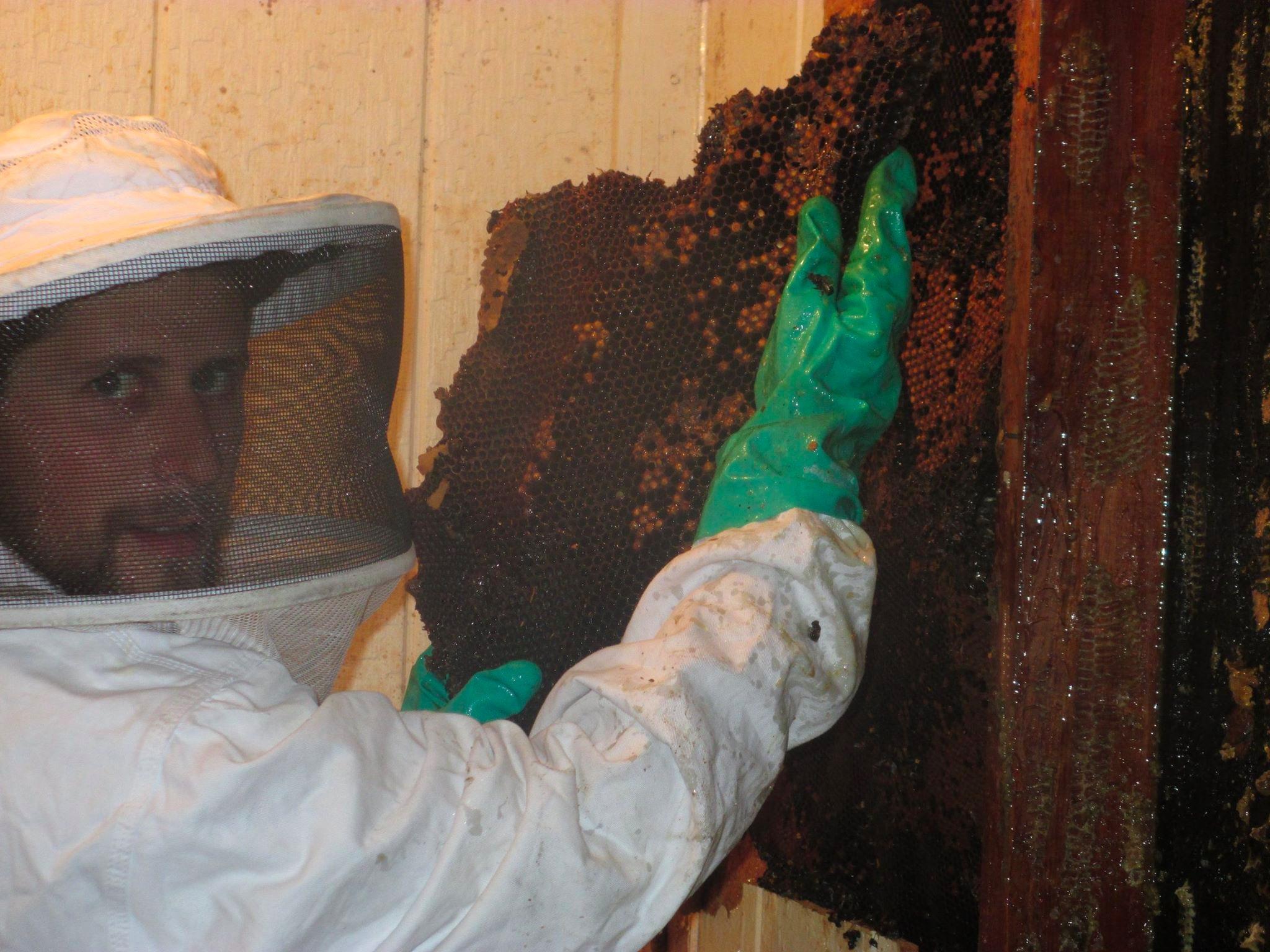 University Termite &  Pest Control, Inc. image 2