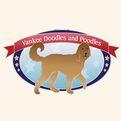 Yankee Doodles and Poodles image 14
