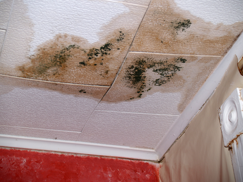 Mold Damage? SERVPRO of Haywood & Transylvania Counties can help.