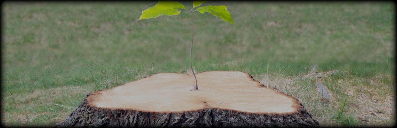 Climbing Sammy's Tree Service image 0
