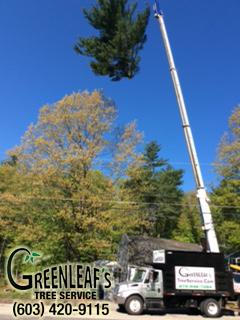 Greenleaf's Tree Service image 7