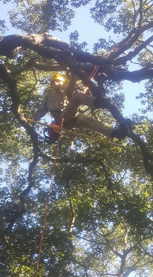Oak tree experts.