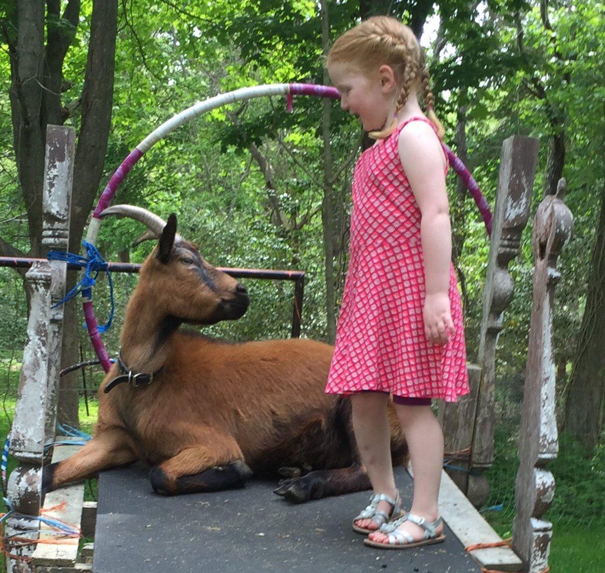 The Goat Cottage image 28