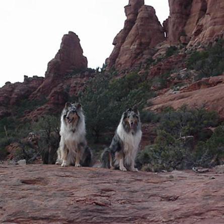 Pearls of Wisdom Dog Training