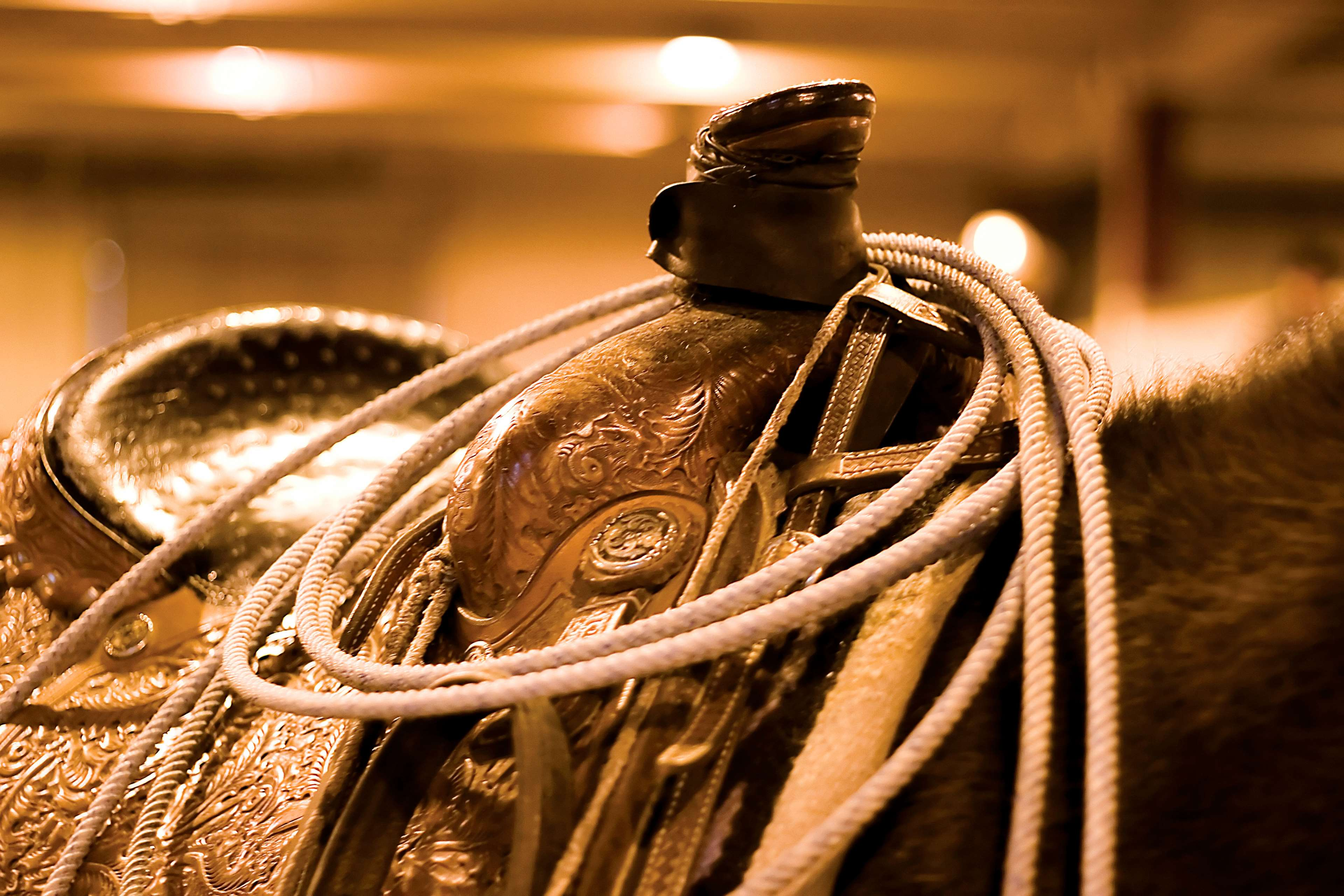 Saddle gear on a horse at stock show