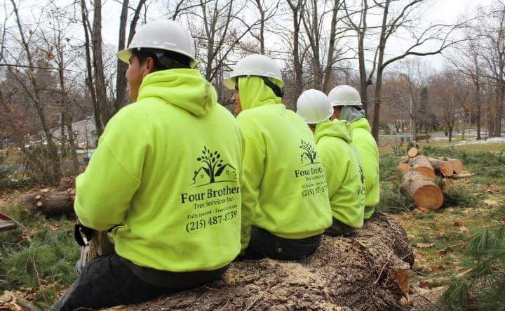 Four Brothers Tree Service Inc. image 19