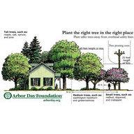 Mission Hills Tree