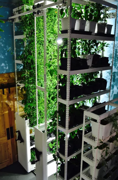 Brighterside Vertical Farms image 2