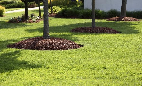 Swingle Lawn, Tree & Landscape Care image 5