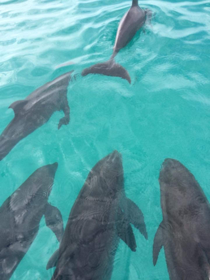 Dolphin Safari Charters Inc image 1