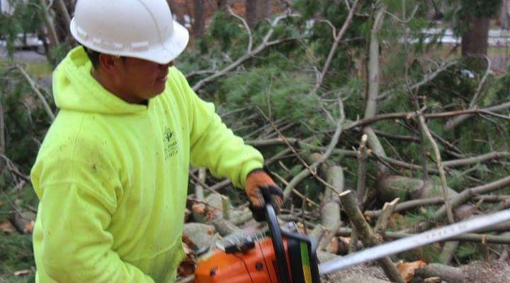 Four Brothers Tree Service Inc. image 24