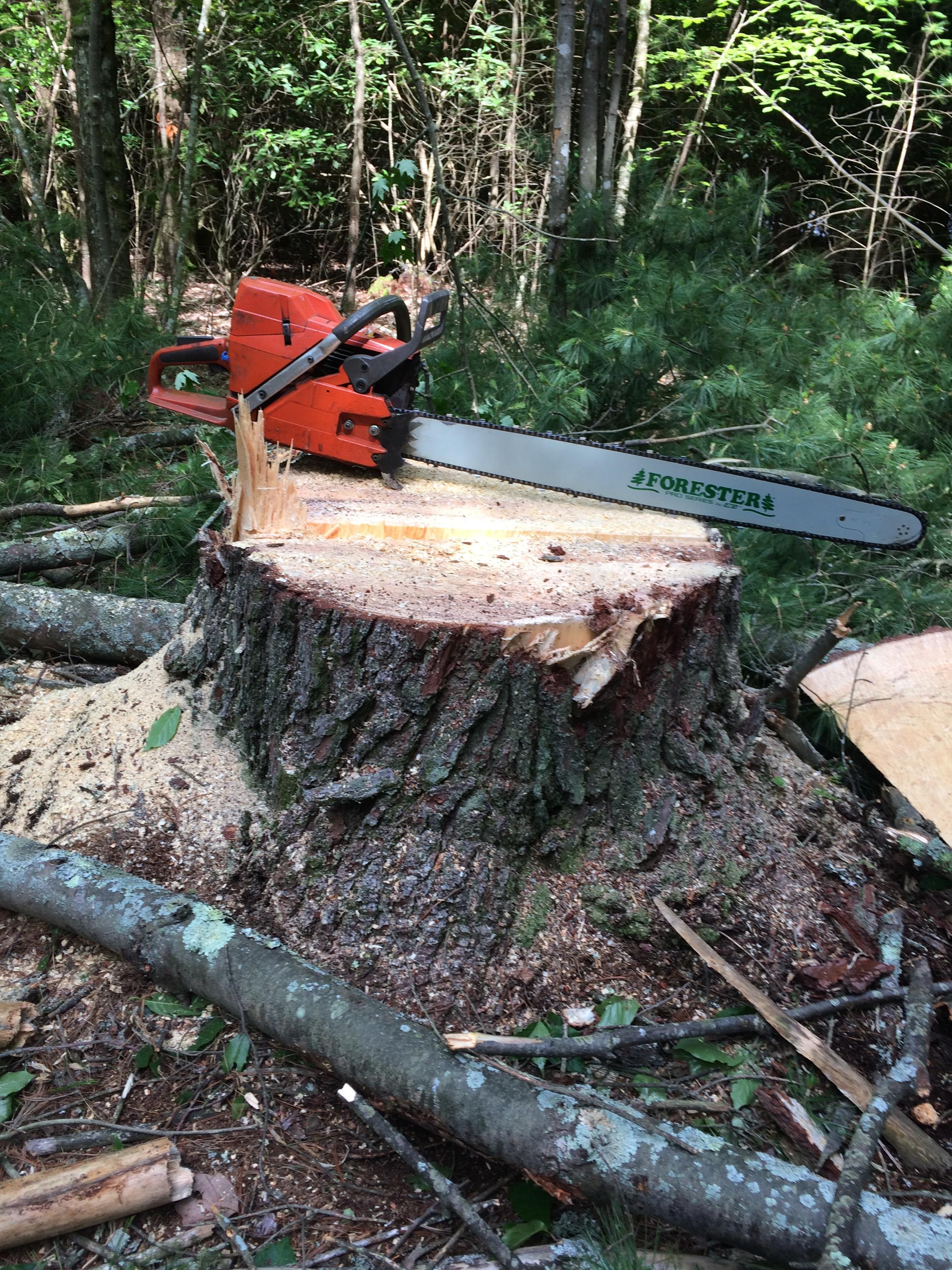 Jacob's Tree Service image 1