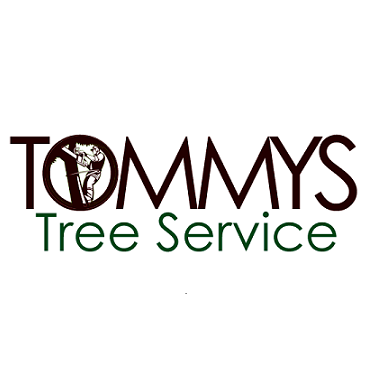 Tommy's Tree Service - Austin, TX 78744 - (512) 577-6465 | ShowMeLocal.com